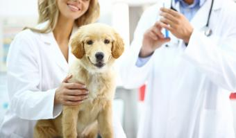 Common Dog Vaccinations and Shot Schedule