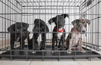 Litter of puppies in animal shelter