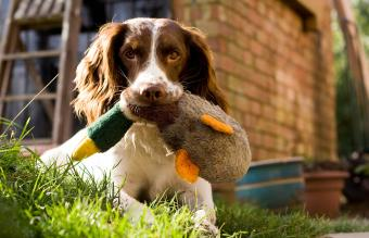 dog with duck toy
