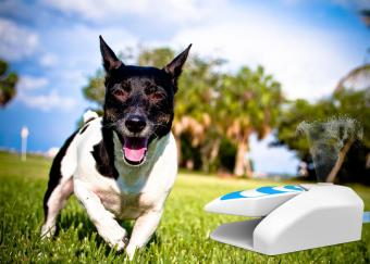 All For Paws Dog Step on Sprinkler Toy