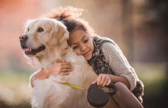 AKC Reunite Program for Lost Companion Animals