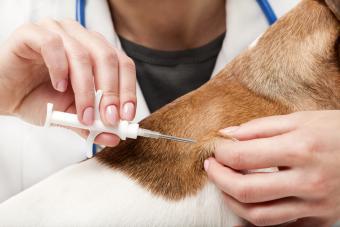 Microchip pet implant