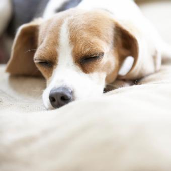 https://cf.ltkcdn.net/dogs/images/slide/248724-850x850-6-mini-beagle-puppy-pictures.jpg