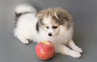 Close-Up Of Dog By Apple
