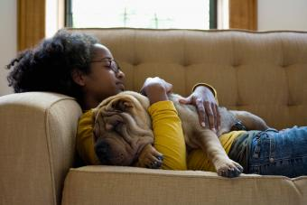 Girl napping with Shar-Pei dog