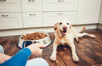 Is Grain-Free Dog Food Bad for Your Dog's Heart?