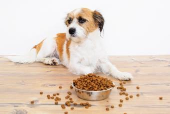 Dog refusing to eat