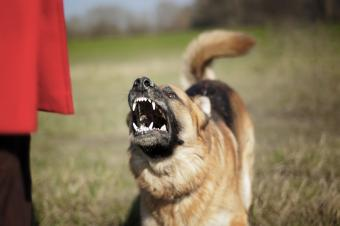 List of the 10 Most Dangerous Dog Breeds