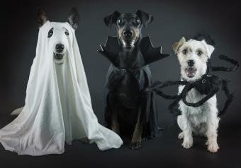 16 Funny Halloween Dog Pictures for Spooky Silliness