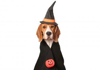 https://cf.ltkcdn.net/dogs/images/slide/252781-850x595-5_Beagle_Witch_Costume.jpg