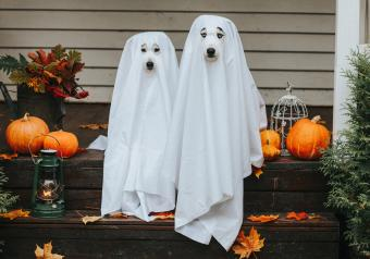 https://cf.ltkcdn.net/dogs/images/slide/252785-850x595-12_Halloween_dogs_ghost.jpg