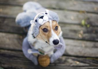 https://cf.ltkcdn.net/dogs/images/slide/252789-850x595-16_Halloween_dog_squirrel.jpg
