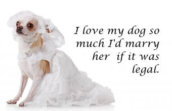 Dog with wedding dress