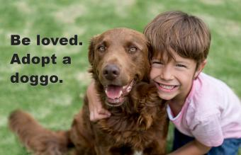 Happy boy with his adopted dog