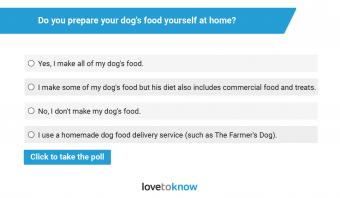 do you make your own dog food poll