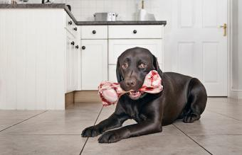 Main Raw Dog Food Pros and Cons to Compare