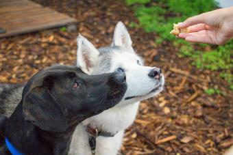 Bones and Raw Food (B.A.R.F.) Diet Guidelines for Dogs