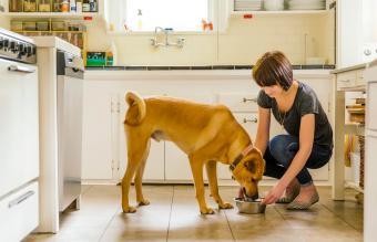 woman feeding dog in kitchen