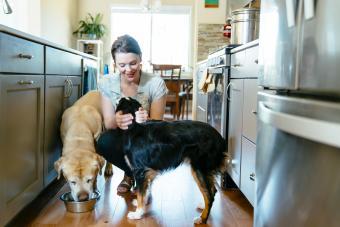 Raw Dog Food Basics for Beginners