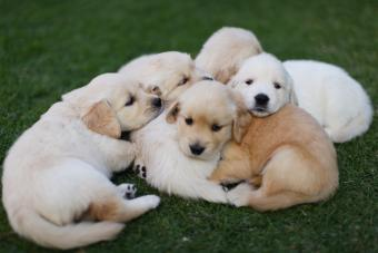 How to Sell Puppies