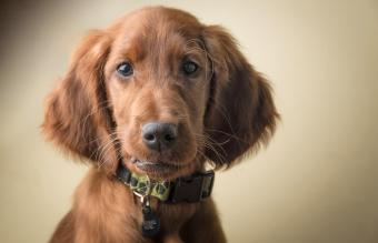100+ Fun Irish Dogs Names for a Pot-of-Gold Pup