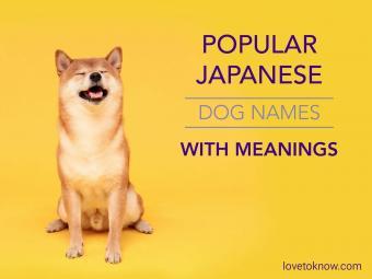 Popular japanese dog names