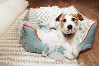 6 Best Indestructible Dog Beds: The Chew-Proof Winners