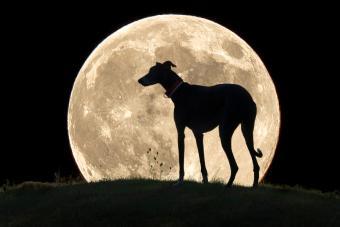 Silhouette Dog Standing On Field Against Full Moon