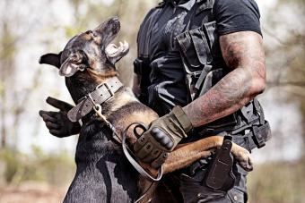 Man training with dog
