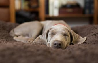 Why Do Dogs Sleep So Much? Know What's Normal