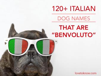 Italian Dog Names That Are Benvoluto