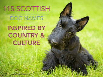 Scottish Dog Names Inspired by Country & Culture