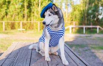 dog dressed in a marine uniform
