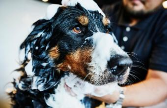 Dog with soap bubbles on head