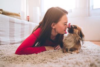 Woman playing with Pekingese dog