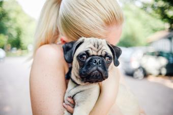Blonde woman cuddling a young pug puppy