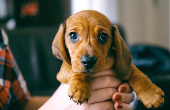 New Puppy Checklist: A Practical Guide on What to Buy