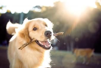 Cute happy dog playing with a stick
