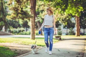 Young woman walking her pet shih tzu dog in a park