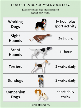 How Often Do You Walk Your Dog? Infographic