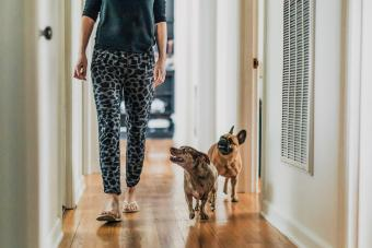 Why Does My Dog Follow Me Everywhere? Understanding Your Pet