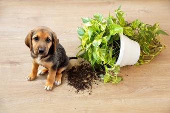 How to Puppy Proof Your House Inside and Out