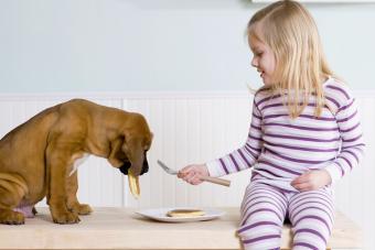 Dog stealing pancakes