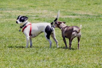 Why Do Dogs Sniff? Exploring a Canine's Sense of Smell