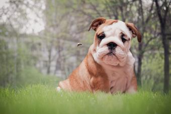 7 Steps to Take If Your Dog Is Stung by a Bee