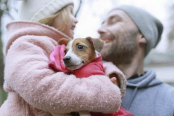 Girl with her dad holding a Jack Russel Terrier puppy