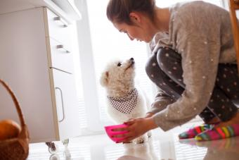Why Is My Dog Not Drinking Water? Identifying the Causes