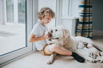 Does a Dog's Behavior Change After Having Puppies?