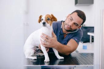 Male Veterinarian Examining Puppy