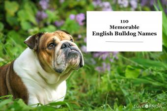 English bulldog with flowers
